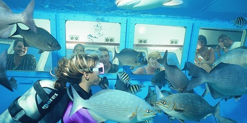 Galveston Cruises Seaworld Explorer Tour Excursions