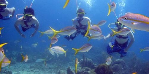 Snuba Cayman Islands